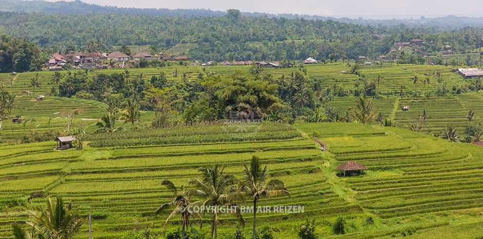 Bali - Jatiluwih rijstterrassen