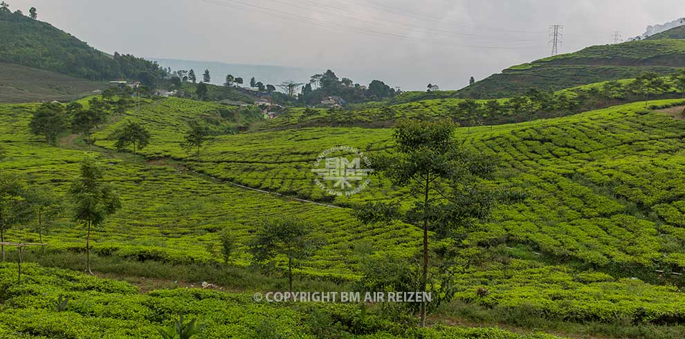Puncak Pass - theeplantages