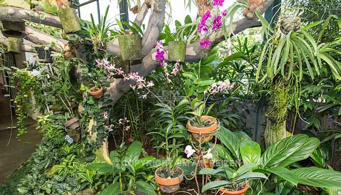 Bogor - Kebun Raya Bogor