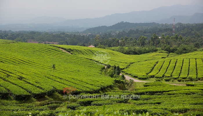Java - Theeplantages