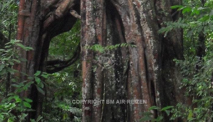 Ketambe - Jungle trekking