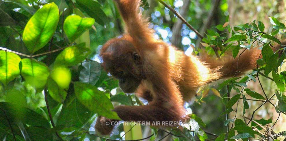 Sumatra - Leuser National Park