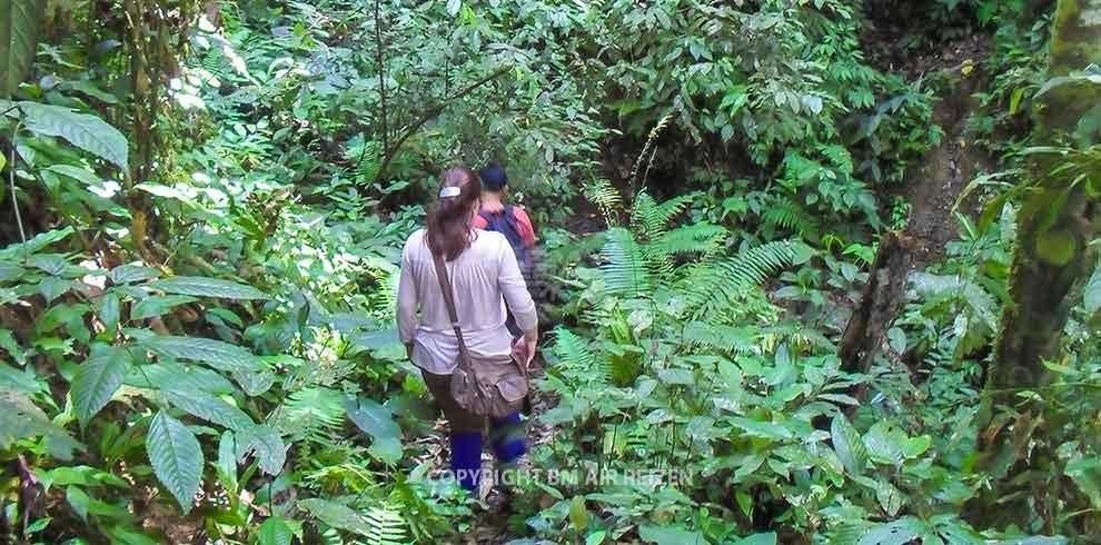 Leuser National Park - trekking