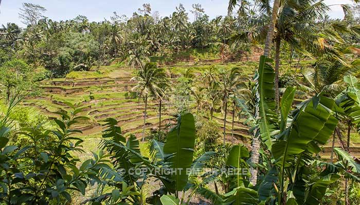 Bali - Tegalalang