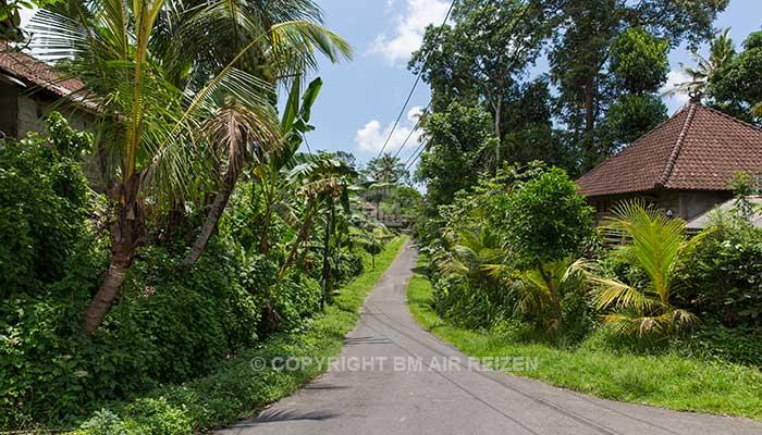 Ubud - Wandelen door de rijstvelden