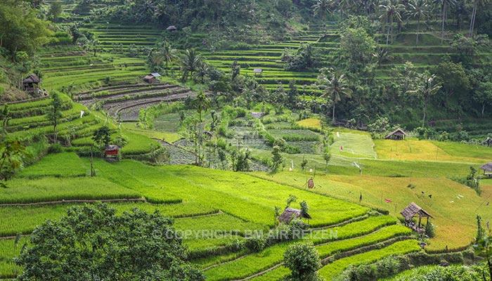 Bali - Pacung rijstterrassen