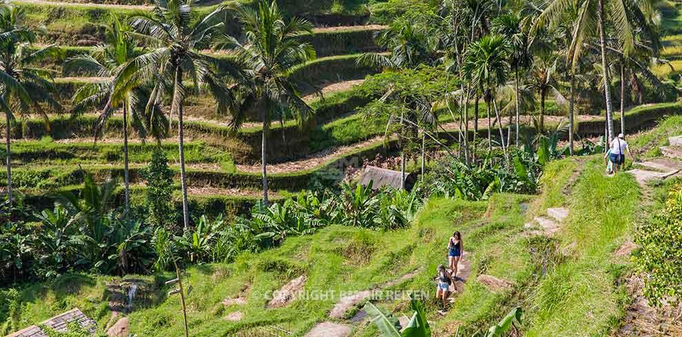 Rondreis Bali Highlights - Ubud - Tegalalang rijstterrassen