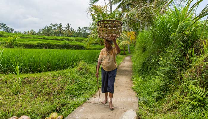 Ubud - Rice paddy wandeltocht
