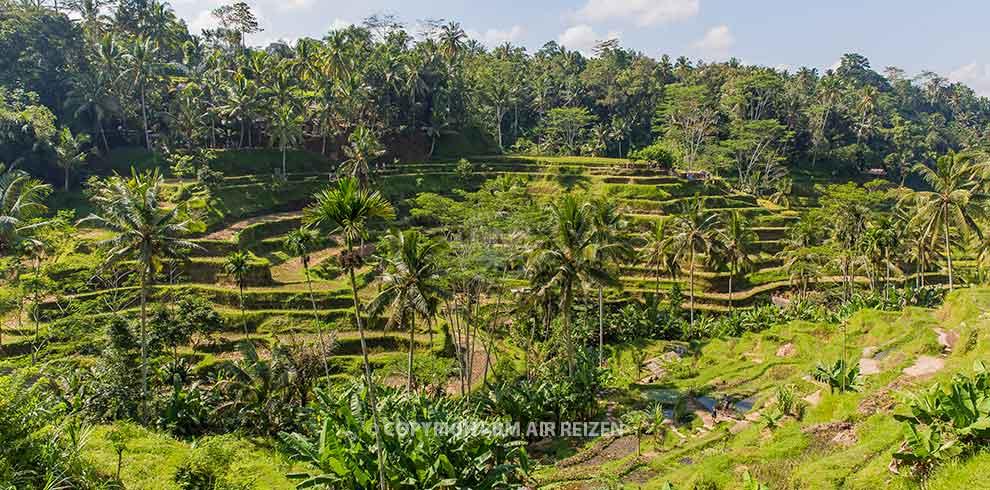 Ubud - Tegalalang rijstterrassen