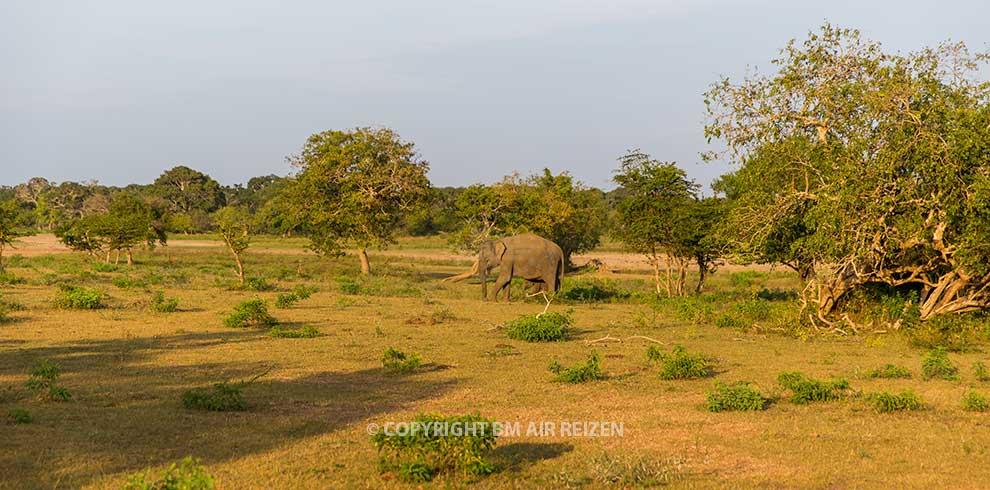 Wilpattu National Park - Jeepsafari