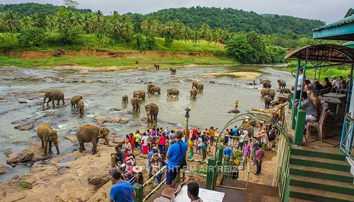 Pinnawela - olifanten in de rivier