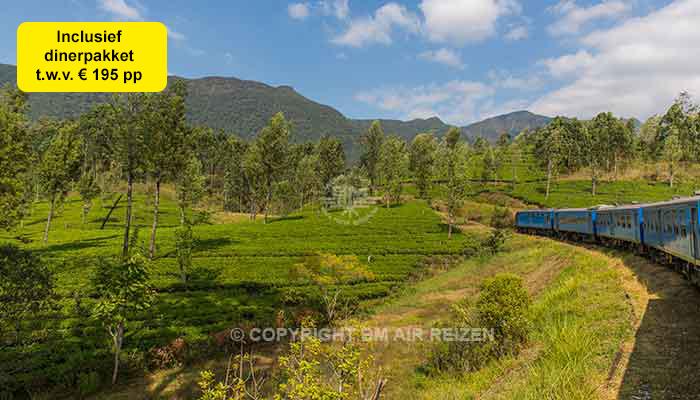 Sri Lanka - treinreis theeplantages