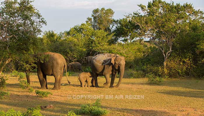 Uda Walawe National Park - Jeepsafari