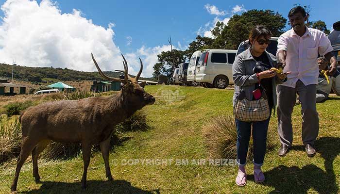 Nuwara Eliya - Horton Plains National Park