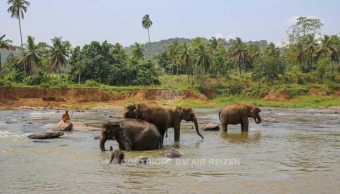 Pinnawela - Olifantenweeshuis
