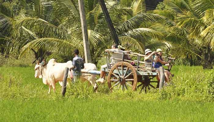 Rondreis Sri Lanka Best Deal - We maken een tocht op een kar door de rijstvelden