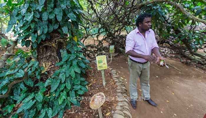 Rondreis Sri Lanka Best Deal - Kruidentuin in Matale