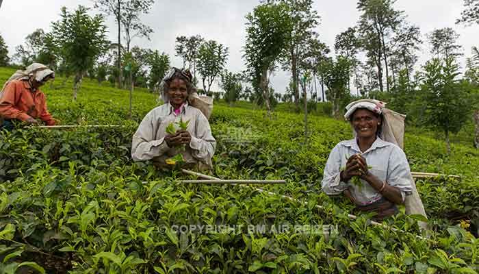 Rondreis Sri Lanka Best Deal - Theeplantage