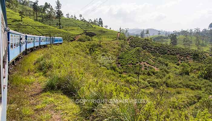 Rondreis Sri Lanka Best Deal - Treinreis langs theeplantages naar Ella