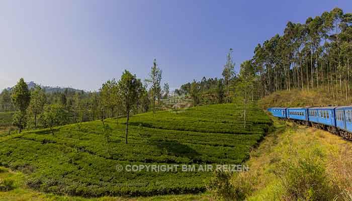 Rondreis Sri Lanka Best Deal - Treinreis langs theeplantages