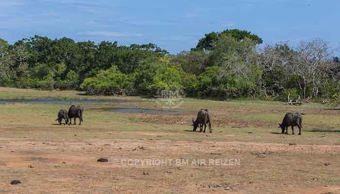 Rondreis Sri Lanka Best Deal - Jeepsafari Yala National Park
