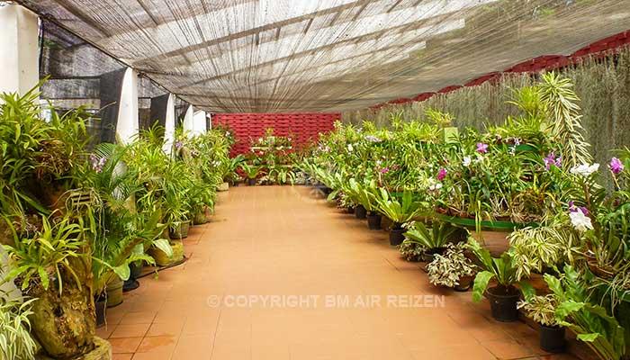 Peradeniya - Botanische tuinen