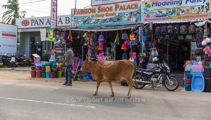 Trincomalee - centrum