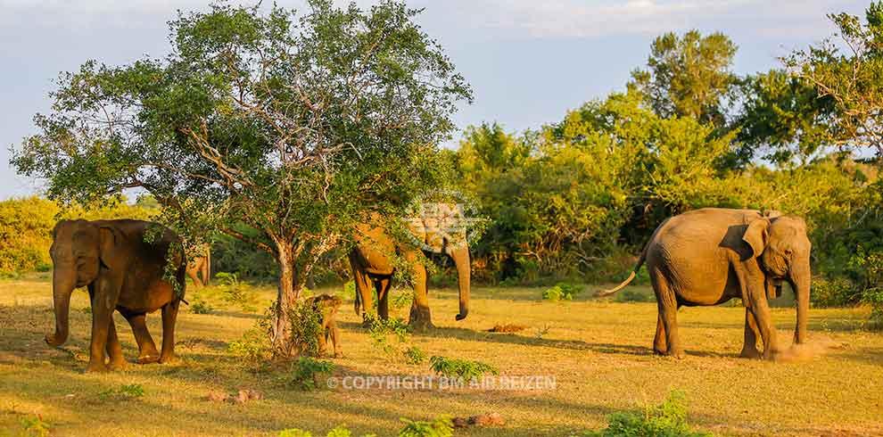 Yala Nationaal Park - Sri Lanka