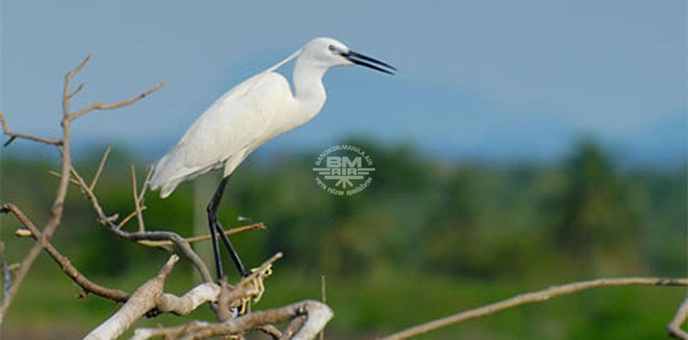 Bundala Nationaal Wildlife Park