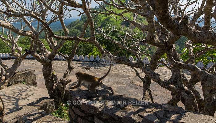 Dambulla - Rotstempel